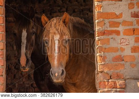 Horses On A Farm. Horse At The Summer Time
