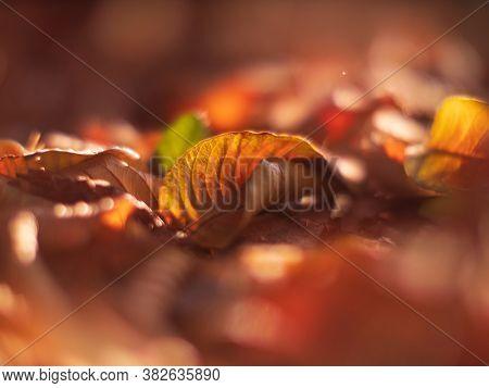 Fallen autumn leaves background. Closeup on yellow leaf. Shallow DOF.