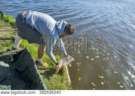 The Sport Fisherman Releases The Caught Carp Back Into The Water. He Previously Measured It And Took