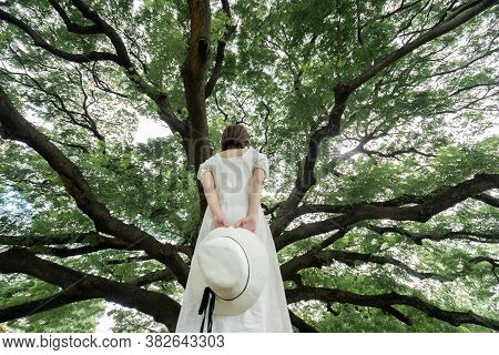 Back Side Of Woman Wearing White Dress Standing Under The Giant Monkey Pod Trees In Kanchanaburi, Th