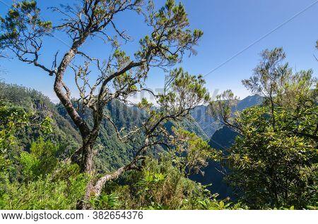 Mountain View With Levada Ribeira Frio-portela Tree In The Foreground. Madeira Island, Portugal.