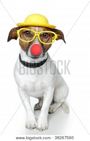 funny a red dog nose hat glasses poster