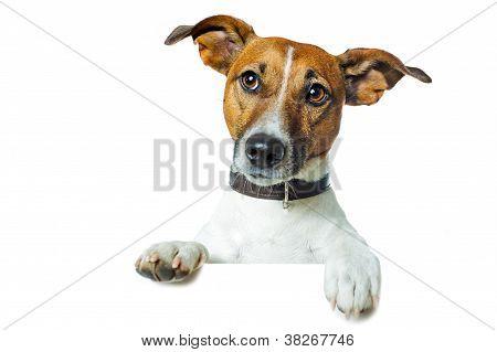 dog banner placeholder resting on the edge poster