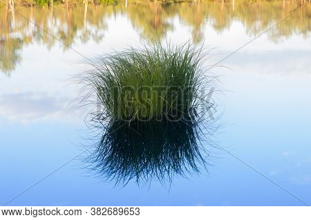 Tuft Of Grass Reflection In The Schoenramer Filz Moor Pond, At Dawn, Located In Upper Bavaria, South