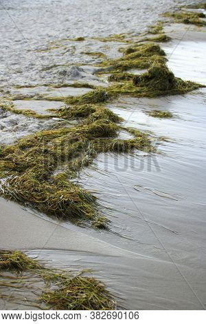 Seagrass Was Washed Up On The Beach On The Island Of Rügen Near Sellin