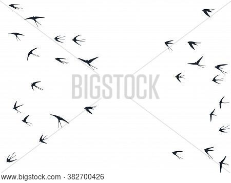 Flying Swallow Birds Silhouettes Vector Illustration. Nomadic Martlets Bevy Isolated On White. Soari