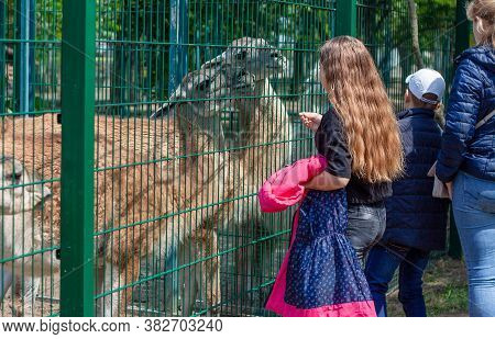 Nikolaev, Ukraine- June 1, 2020: Family Of Mother And Her Son And Daughter Walks In The Zoo. Girl Fe
