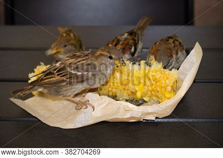 Sparrows Pecking Corn In Paper Packaging On The Table