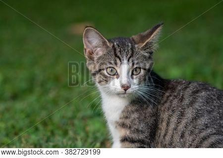 Portrait Of Cute Tabby Kitten In The Grass