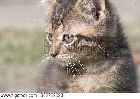 Portrait Of Cute Tabby Kitten