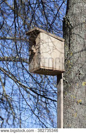 An Ordinary Wooden Birdhouse Is Installed On The Trunk Of An Old Tree, A Hand-made Birdhouse Made Fr