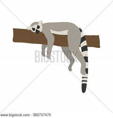 Cute Funny Lemur On An Isolated White Background. Mammal Animal Lies On A Tree Branch. Vector Stock