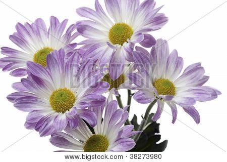 close up shot of purple flowers