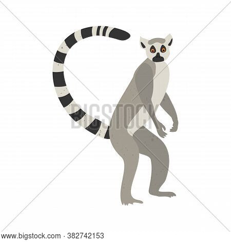 Cute Funny Lemur On An Isolated White Background. Vector Stock Illustration. Cartoon Style, Flat Des