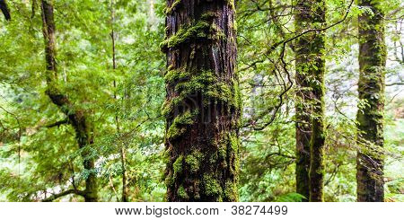 Tree covered in moss and fern in rain forest.
