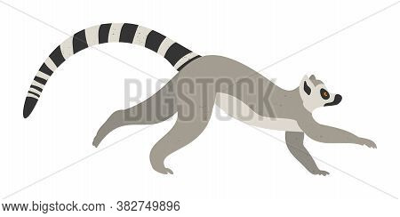 Cute Funny Lemur On An Isolated White Background. Vector Stock Illustration. Hand-drawn Illustration