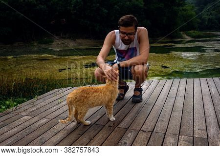 A Man Is Playing With A Domestic Red Tabby Cat.