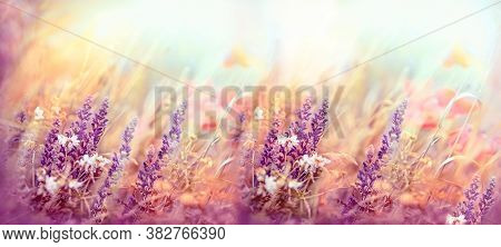 Beautiful Nature, Flowering Purple Flowers, Meadow Flowers In Bloom, Meadow Landscape Lit By Sunligh