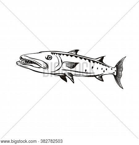 Retro Style Illustration Of A Barracuda Or Sphyraena Barracuda, A Large, Predatory Saltwater Ray-fin