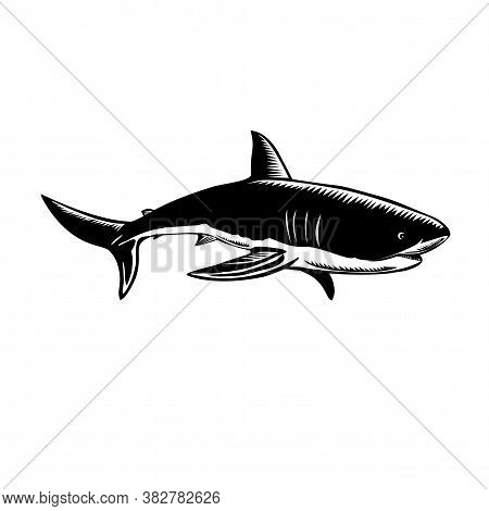 Retro Woodcut Style Illustration Of A Great White Shark Carcharodon Carcharias, White Shark Or White