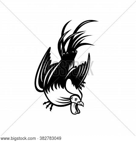 Retro Style Illustration Of Junglefowl, Jungle Fowl, Cockerel Or Rooster In Fighting Stance Viewed F