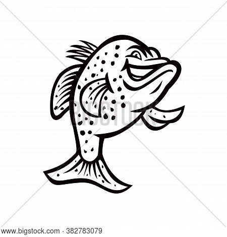 Black And White Illustration Of A Crappie, Croppie, Papermouths, Strawberry Bass, Speckled Bass, Spe