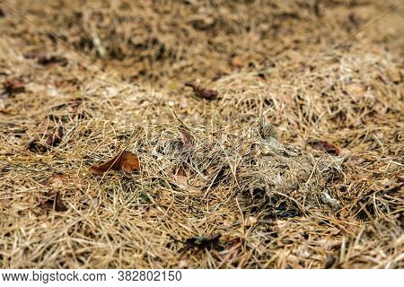 Dry Grass Of A Beige-yellow Hue, Mixed With Leaves, Lies On The Ground, Close-up.