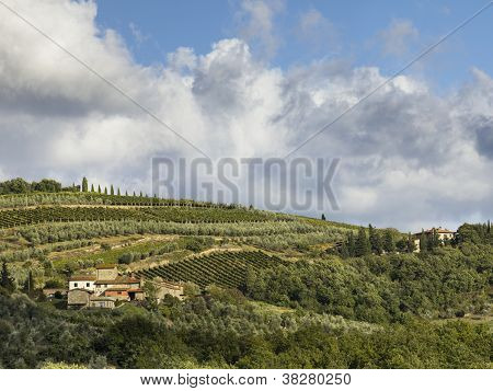Far View Of A Vineyard In Tuscany