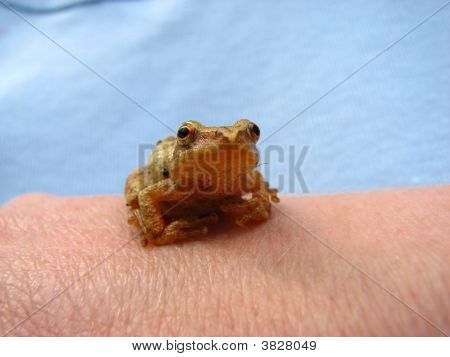 Frog Looking At You