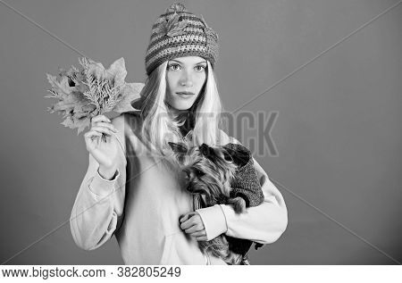 Regular Flea Treatment. Girl Hug Cute Dog And Hold Fallen Leaves. Woman Carry Yorkshire Terrier. Tak