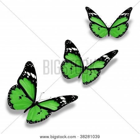 Three Green Butterflies, Isolated On White