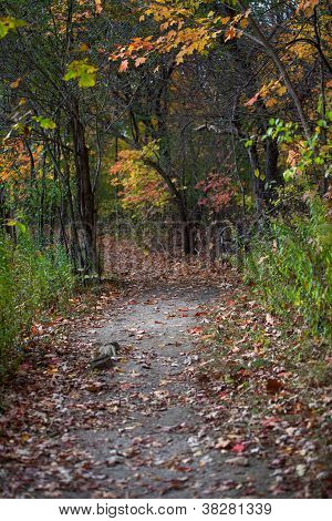 Walkway And Autumn Trees