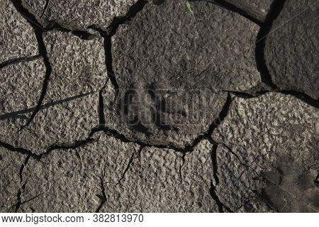 Dog Footprint On The Soil Land. Grunge Background. Copy Space.