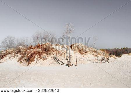 Sandy Crumbling Dunes With Bare Roots Of Shrubs And Old Alder Trees