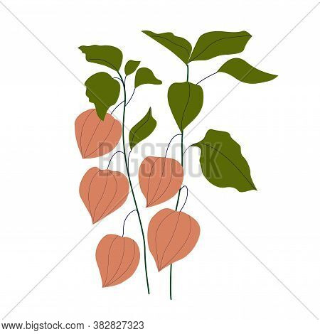 Set Of Bright Autumn Leaves - Physalis, In Vector Graphics On A White Background. For The Design Of