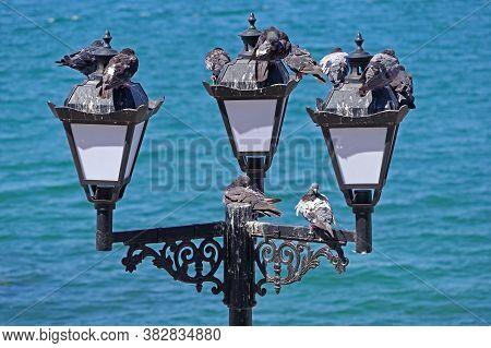 Pigeons Mess On Streetlight Against Blue Sea
