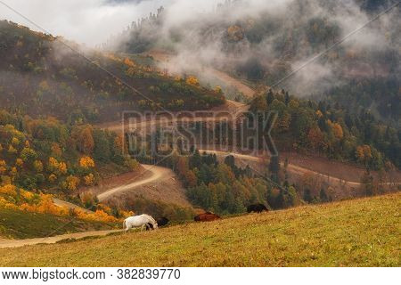 White And Brown Horses On A Picturesque Autumn Pasture In The Mountains. In The Background, The Autu