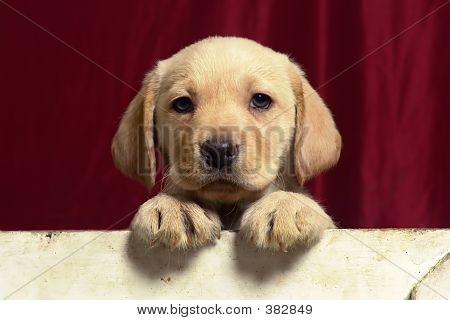 Puppies19