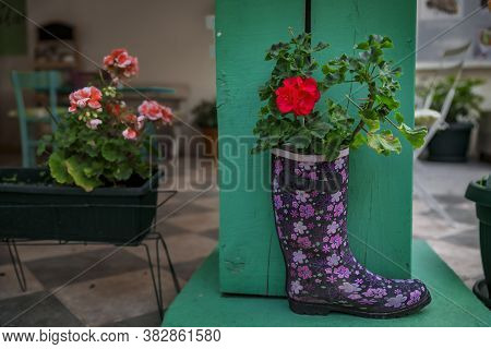 Old Rainboot Recycled And Transformed Into A Planter With A Blooming Geranium In The Streets Of Medi