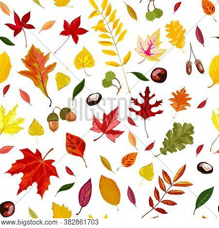 Autumn Leaves, Acorns And Chestnut Seamless Pattern Vector