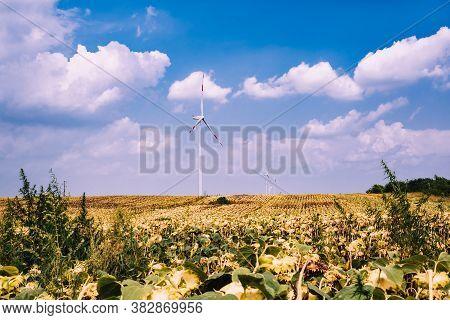 Wind Turbine In Sunflower Field. Sustainable Energy. Sustainable Electric Energy Source. Wind Turbin