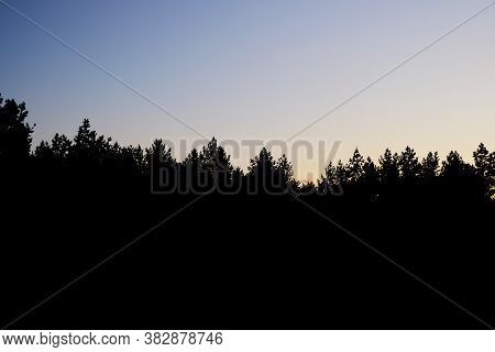 Black Silhouette Of A Pine Forest Against A Cloudless Sky At Sunset