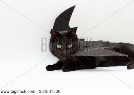 Funny Black Cat In Bat Costume For Halloween