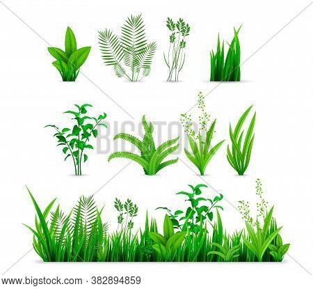 Realistic Spring Grass Set. Illustration Of Realism Style Drawn Green Fresh Plants Or Garden Seasona