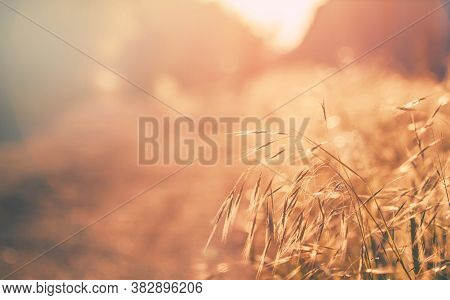 Summer Background, Landscape At Sunset, Grass In Backlight, Blurred Image With The Effect Of Motion,