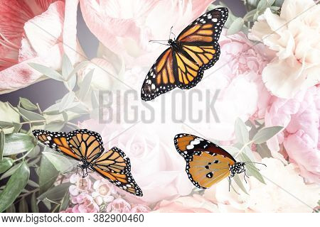 Beautiful Monarch And Plain Tiger Butterflies On Flowers, Closeup