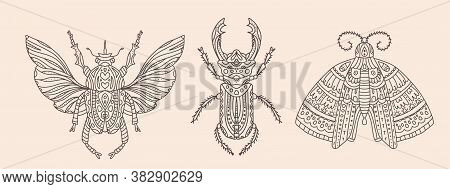 Set Of Vector Illustrations With Insects. Butterfly Or Moth, Beetle With Wings And Stag Beetle. Deta