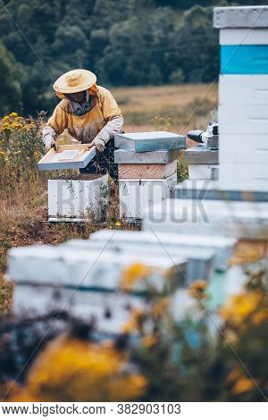 Beekeeper In Protective Wear Working In His Apiary. Beekeeping Concept