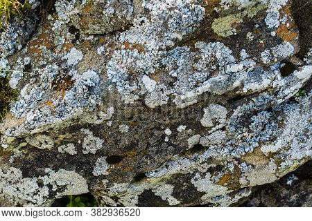 Moss And Lichen On Rocks In The Mountains. Flora Of The Carpathians. Yellowed Grass In Autumn. Moss,