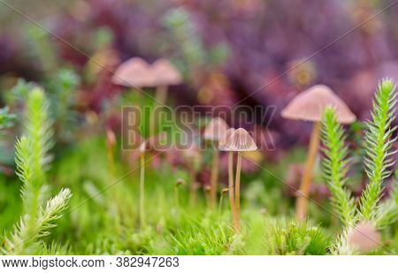 Macro Photo Of Bright Green Moss Plants In The Northern Scandinavian Boreal Forest